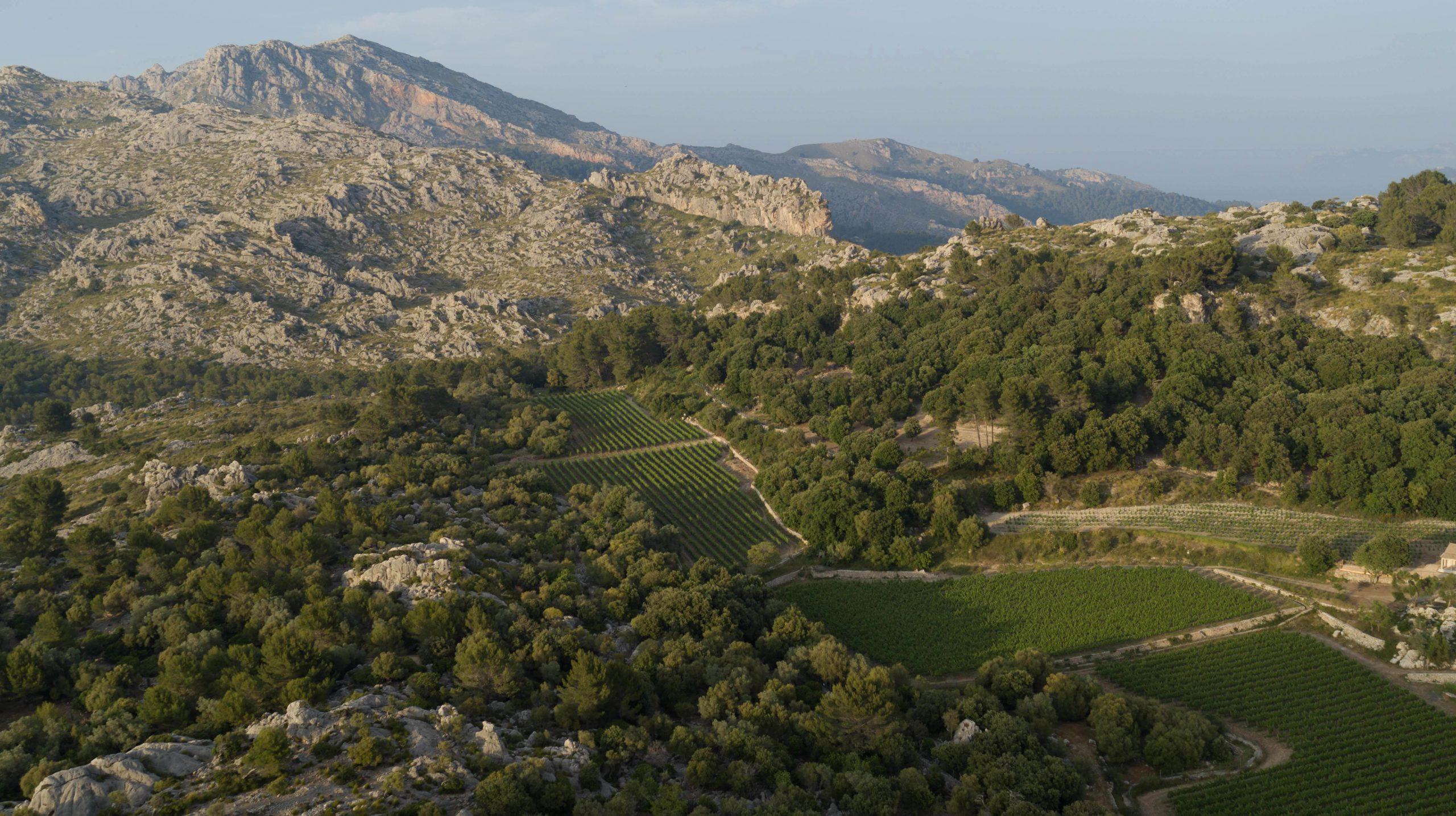 Vinyes de Vi de la Terra Mallorca